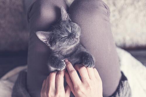 Adoptar gato o gata