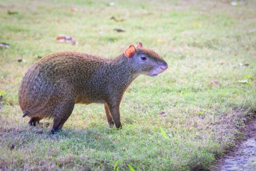 5 característicos animales de Centroamérica
