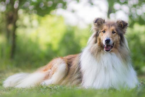 Qué debes saber sobre la alimentación de perros de pelo largo