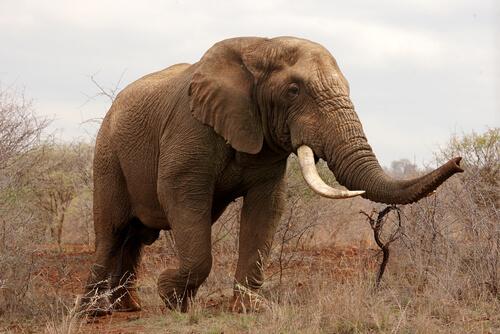 5 animales con mejor olfato