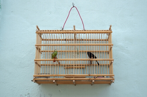 Aves en jaulas