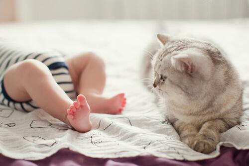 Bebés y gatos: convivencia