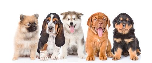¿Cómo conseguir que tus cachorros socialicen?