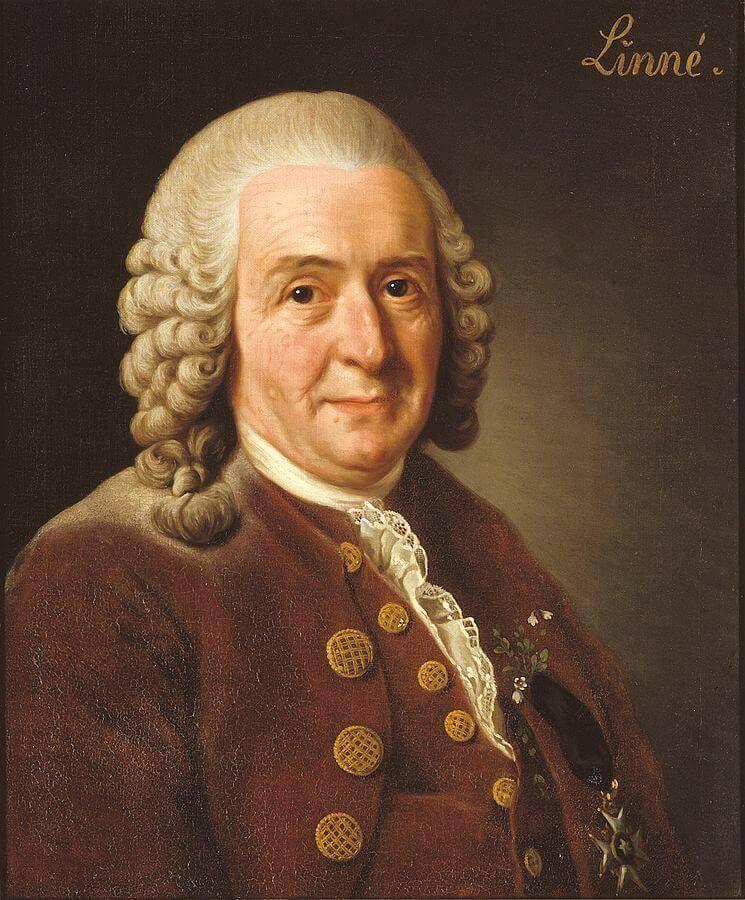 Carl Von Linneo y la taxonomía de las especies
