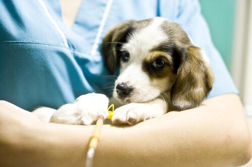 Estas son las mejores clínicas veterinarias de Valencia