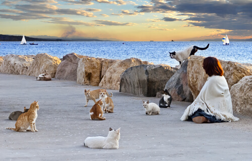 ¿Por qué las colonias felinas deben ser controladas?
