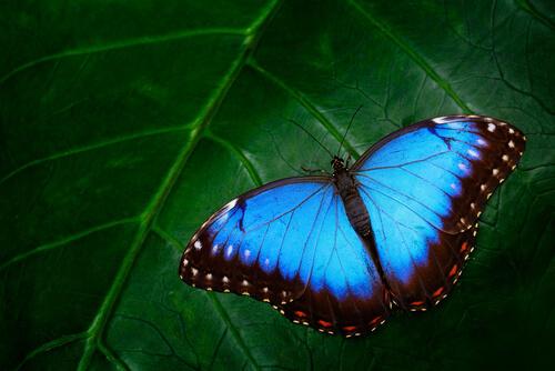 El colorido de las mariposas