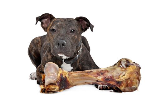 Comida para perros molosos