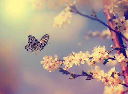 Cómo atraer mariposas al jardín