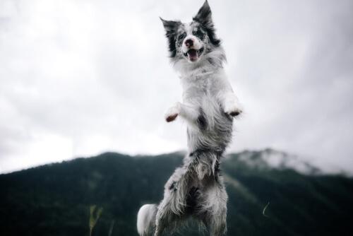 Cómo calmar a un perro hiperactivo