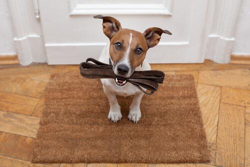 Cómo hacer a un perro obediente