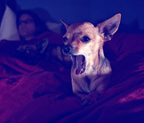 Qué Hacer Para Que Tu Perro No Ladre De Noche Mis Animales