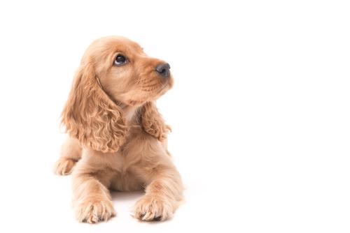 Cómo hacer que tu perro te respete desde cachorro