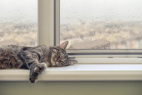 ¿Cómo reacciona tu gato ante la lluvia?