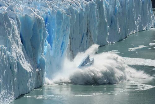 Consecuencias del cambio climático en la fauna