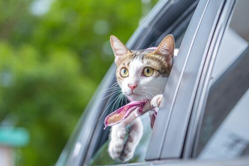 Consejos para viajar con gatos en coche