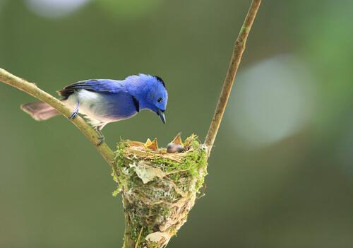 Aves expertas en construir su nido