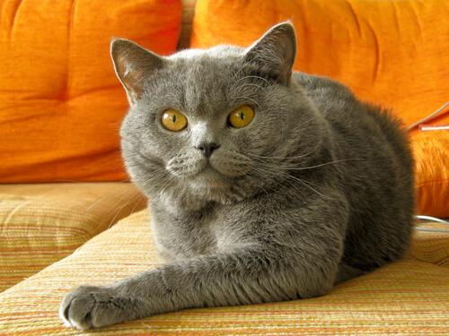 Corregir mal comportamiento en tu gato