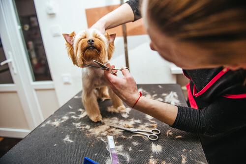 ¿Tengo que cortar el pelo de mi mascota en verano?