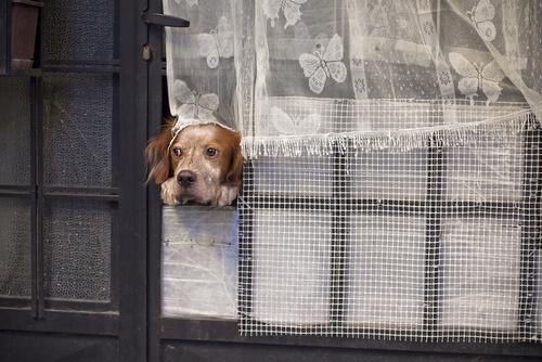 ¿Cuántos días puede tu perro quedarse solo?