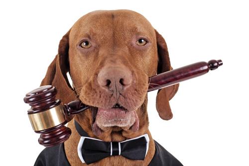 Perro representa la Declaración Universal de los Derechos de los Animales.