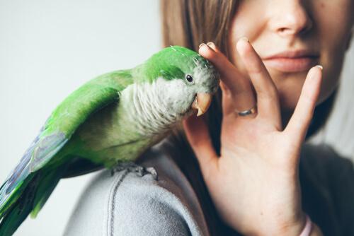 Desparasitado de tus pájaros domésticos