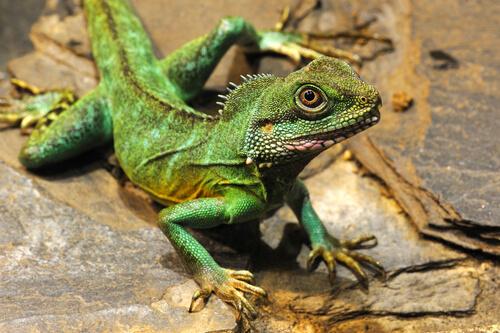 Dragón verde de Feng Shui