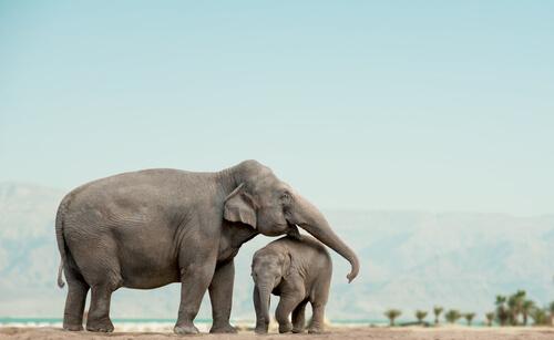 Elefantes huérfanos en libertad