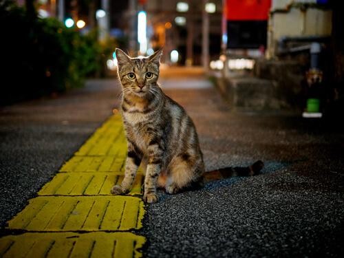 Enfermedades de los gatos callejeros