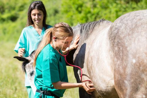 Enfisema subcutáneo en caballos