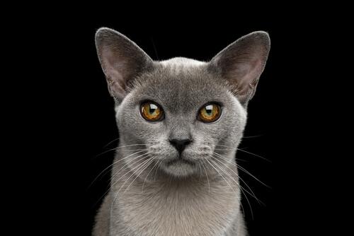 Felinos: visión nocturna