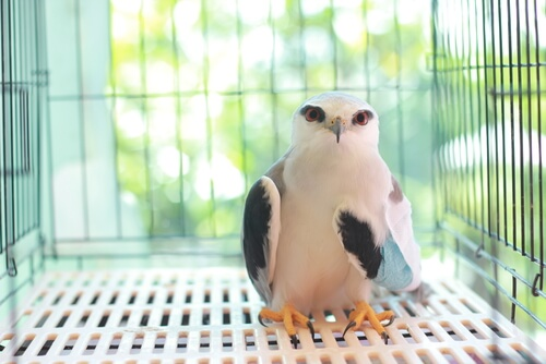 Fracturas en aves rapaces