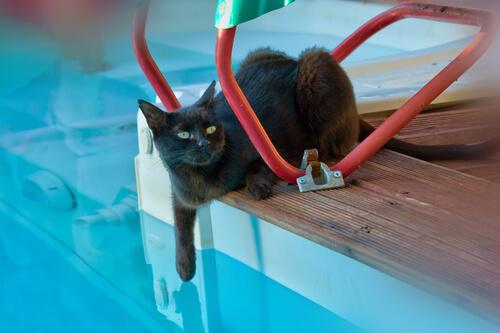 ¿Puede bañarse tu gato en la piscina?