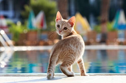 Gato le gusta bañarse