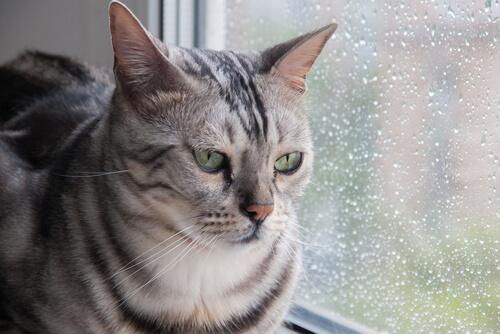 Gato tiene miedo a tormenta