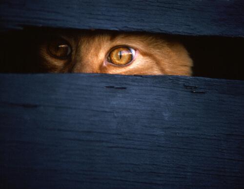 Los gatos espía de la CIA