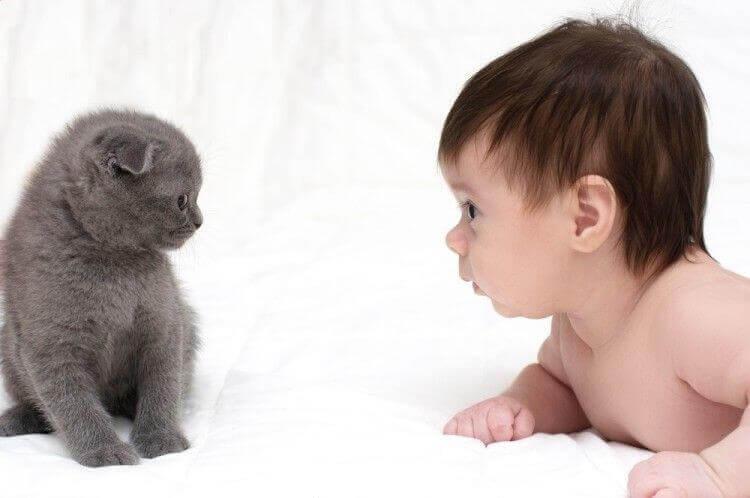 ¿Pueden los gatos ser amigos de los bebés?