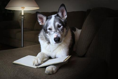 Habilidades sociales del perro