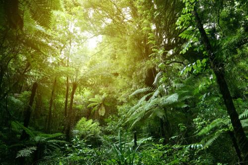 Temperatura y hábitat en la selva