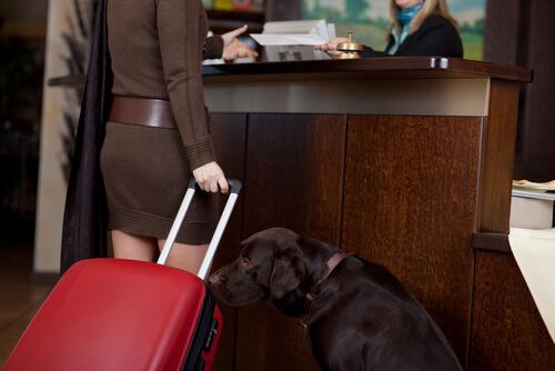 Pautas generales sobre hoteles de verano y mascotas