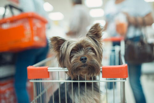 ¿Puedes ir de compras con tu mascota?