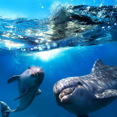 Los delfines juegan