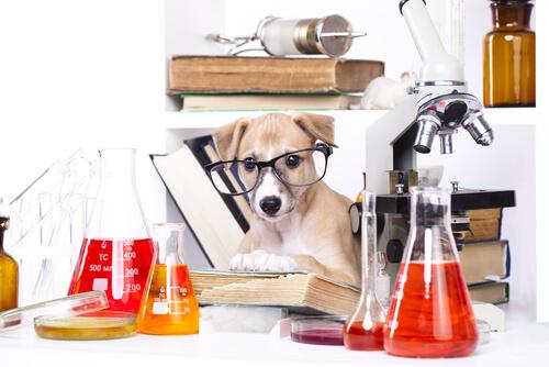 ¿Los perros entienden la física?