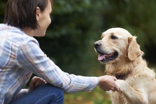 7 способов побаловать свою собаку