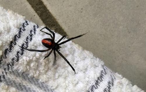 Por qué nunca deberías matar a una araña en tu casa
