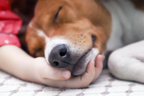 Tratamiento y contagio del moquillo canino