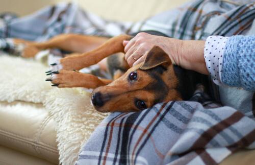 Moquillo canino: síntomas