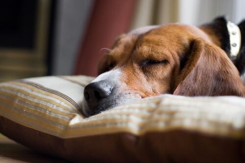5 señales que indican que un perro está a punto de morir