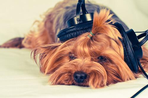 Música para perros que se quedan solos