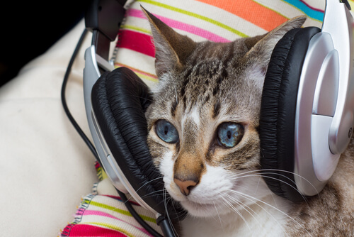 ¿La música también tiene beneficios para los gatos?